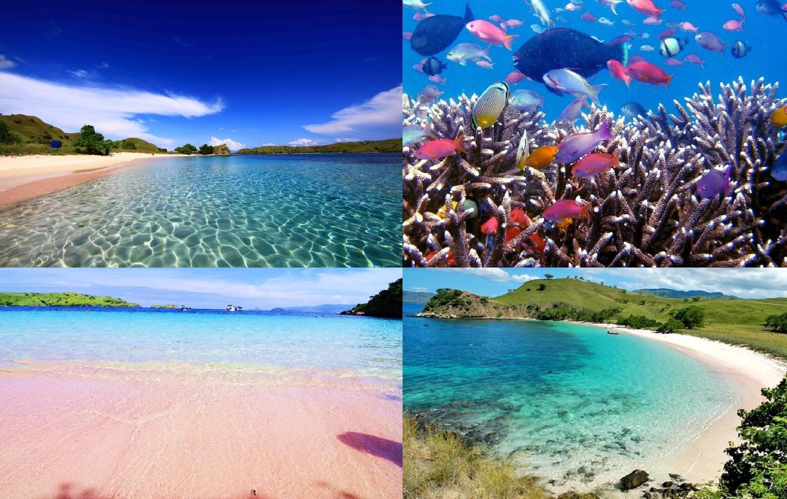 Keunikan Indonesia Pantai Pink Lombok Timur Click Enlarge Image Beach