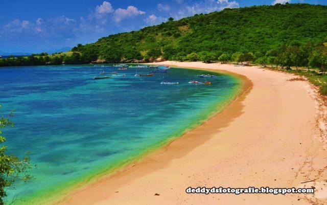 Pantai Pink Lombok Timur Lombokita Kab