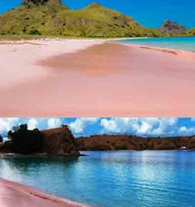 Pantai Pink Pasir Cantik Indah Ensiklopedia Indonesia Lombok Kab Timur