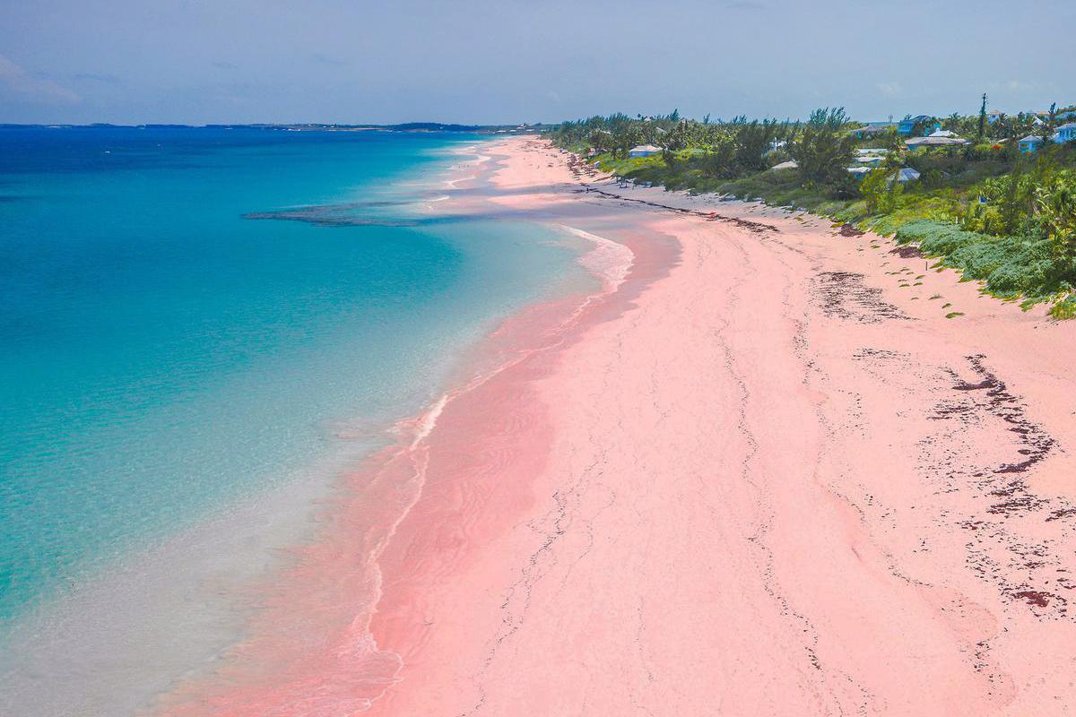 Pantai Pink Tangsi Cari Tau Yuk Keunikannya Apw Magazine Lombok