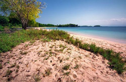 Pantai Pink Tangsi Lombok Mataram Web Ternyata Punya Lho Alias