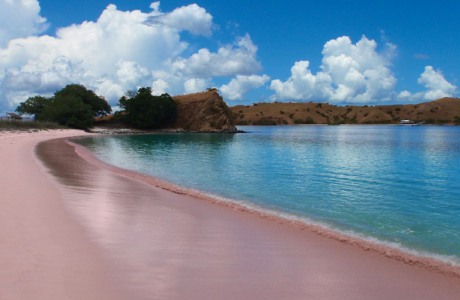Scenic Tourism Beauty Pink Beach Lombok Indonesia Pantai Kab Timur