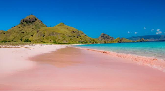 Surga Wisata Pantai Pink Lombok Timur Djava Vista Tours Paket