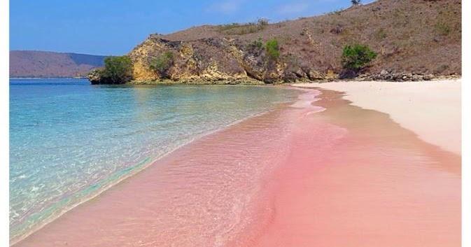 Tour Pink Beach Completely 3 Gilis Snorkling Lombok Society Pantai