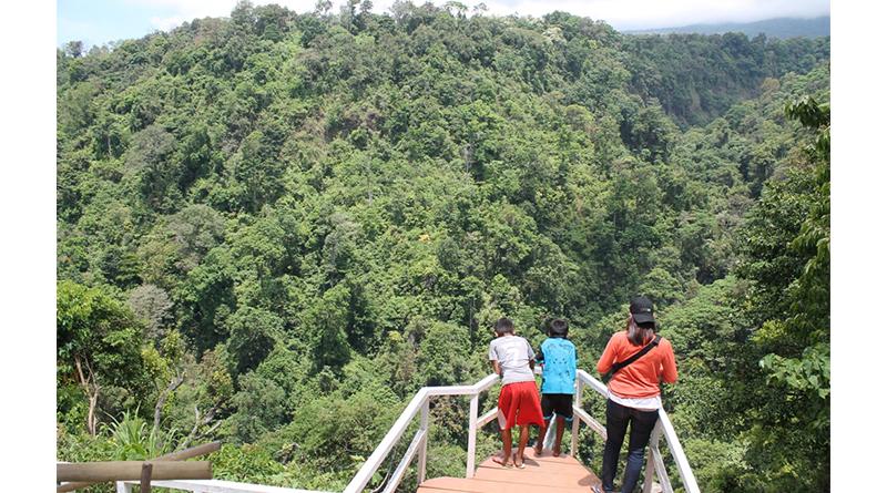 Kebun Kopi Senaru Jadi Obyek Wisata Alternatif Posbali Id Desa