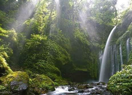 Surga Tersembunyi Air Terjun Tiu Kelep Lombok Tempat Wisata Beautiful