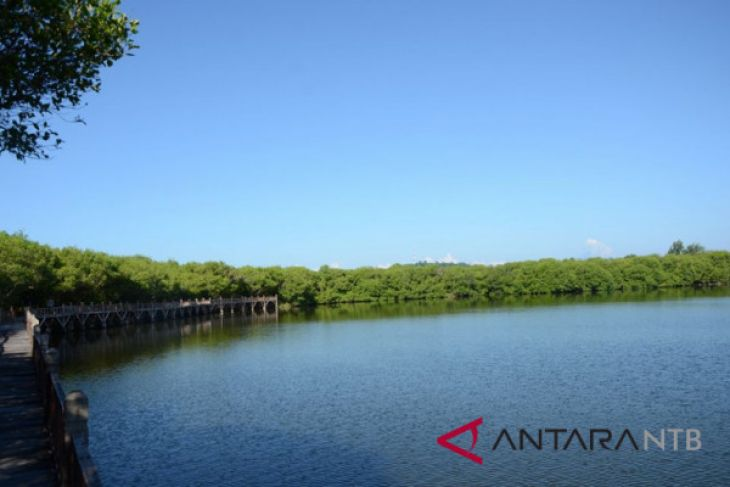 Menikmati Pesona Danau Hutan Mangrove Gili Meno Antara News Air