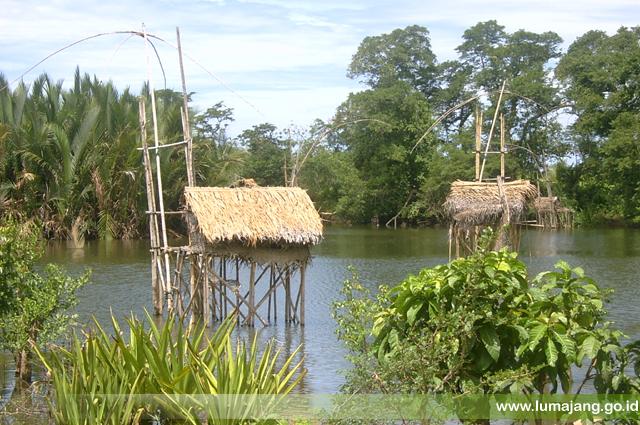 Home Stay Lumajang Pantai Tlepuk Lokasi Pasirian Kab