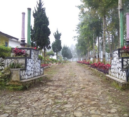 Pesona Keindahan Wisata Kebun Teh Kertowono Gucialit Lumajang Pengunjung Bisa