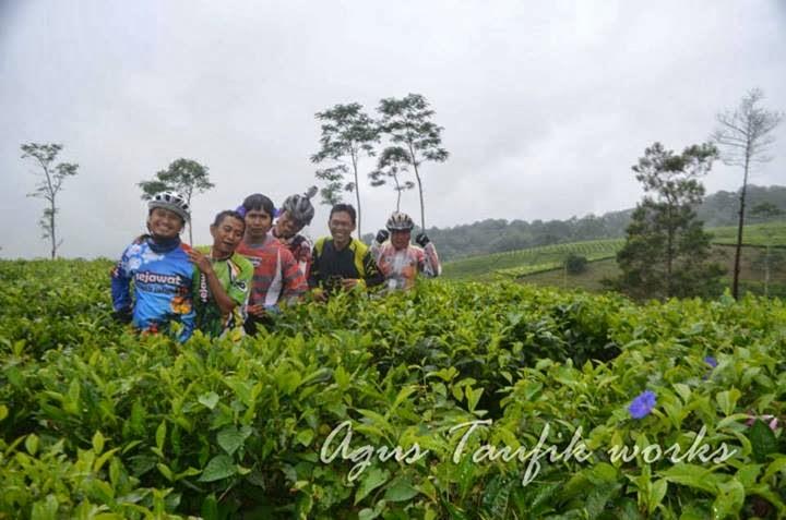 Probolinggo Bike Track Kebun Teh Kertowono Tak Membosankan Kamping Menyempatkan