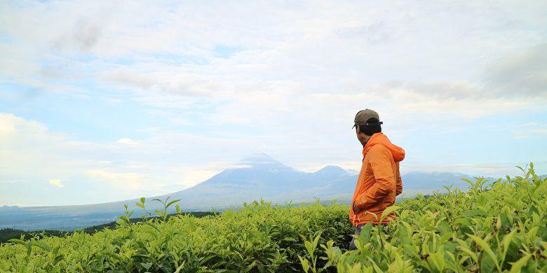 Wisata Perkebunan Teh Kertowono Aktivitasnya Kompas Kampung Raya Dikenal Sebutan