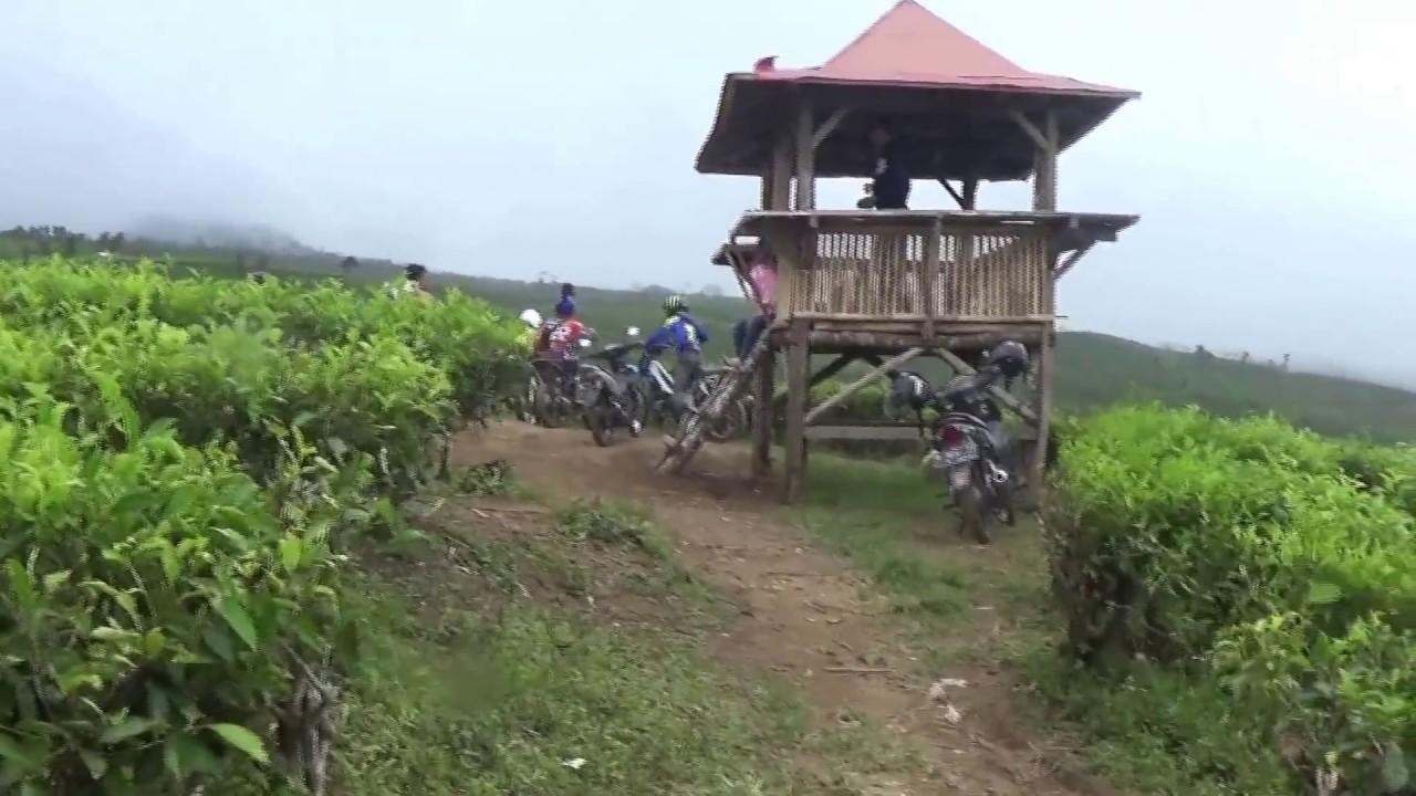 Wisata Perkebunan Teh Kertowono Gucialit Lumajang Youtube Kab