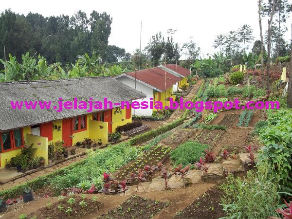 Www Jelajah Nesia Blogspot Pesona Wisata Guci Alit Lumajang Kabupaten