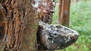 1 58 Mb Wisata Hutan Pinus Nongko Ijo Kec Kare