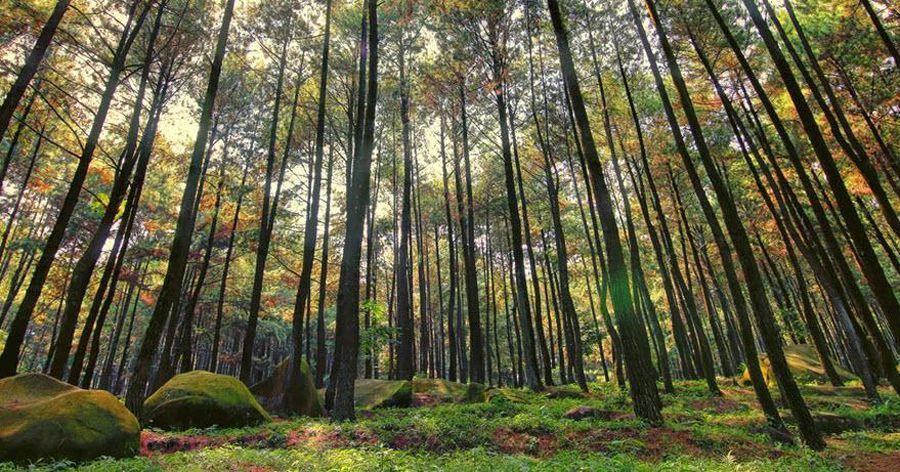 10 Objek Wisata Ponorogo Hits Dikalangan Anak Muda Hutan Pinus