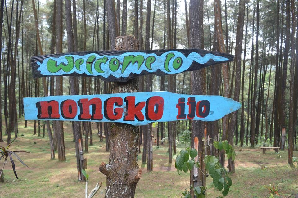 Destinasi Wisata Hutan Pinus Nongko Ijo Kecamatan Kare Foto Group