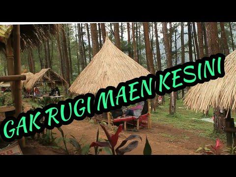 Download Lagu Wisata Alam Jawatimur Hutan Pinus Nongko Ijo Kare