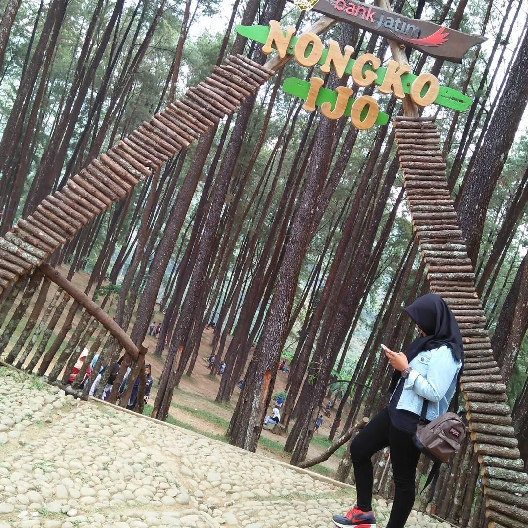Harga Tiket Masuk Hutan Pinus Nongko Ijo Madiun 2018 Wisata