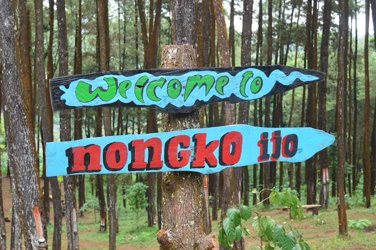 Hutan Pinus Nongko Ijo Fasilitas Objek Wisata Kare Kab Madiun