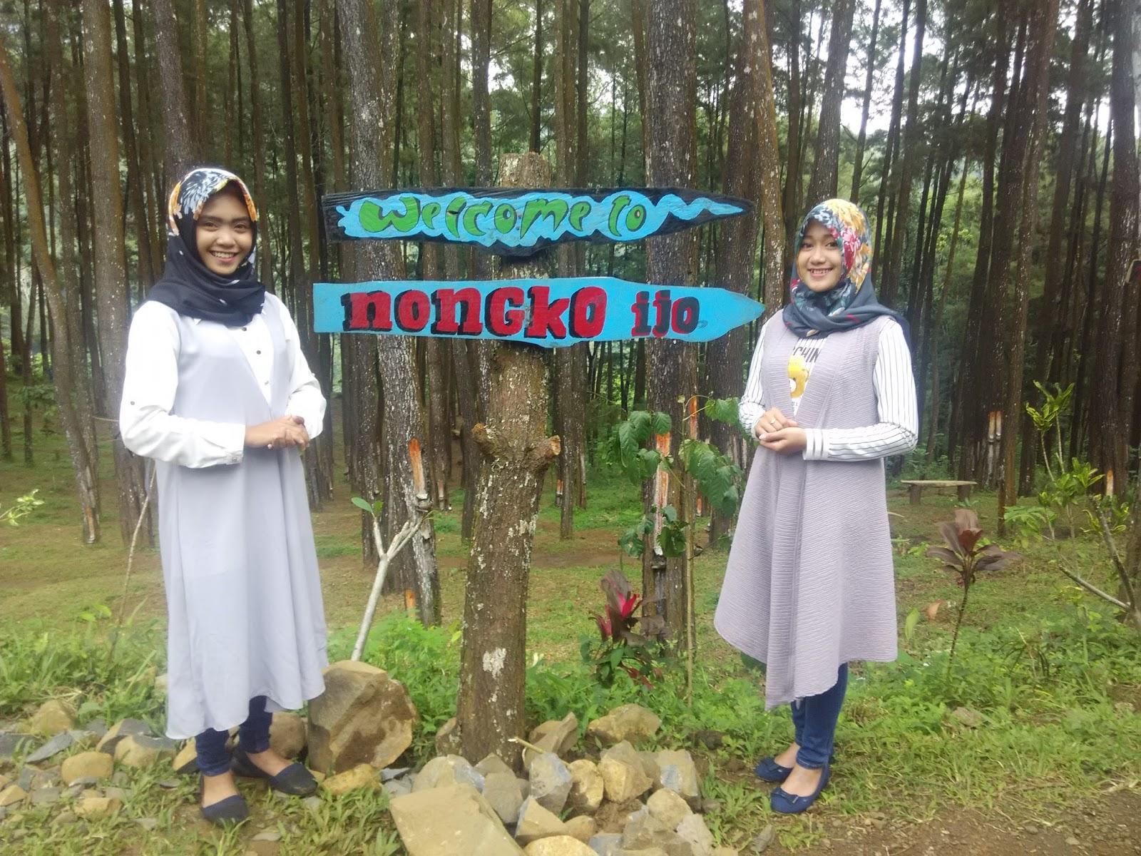 Hutan Pinus Nongko Ijo Sejarah Kare Kab Madiun