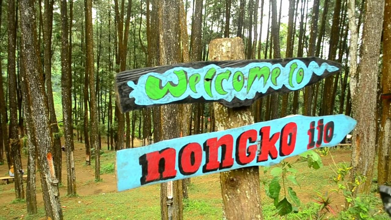 Hutan Pinus Nongko Ijo Tempat Wisata Asyik Jawa Timur Kare