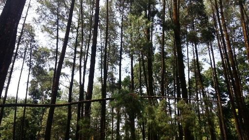 Hutan Pinus Wisata Hits Madiun Oleh Dodi Mawardi Dokumentasi Pribadi