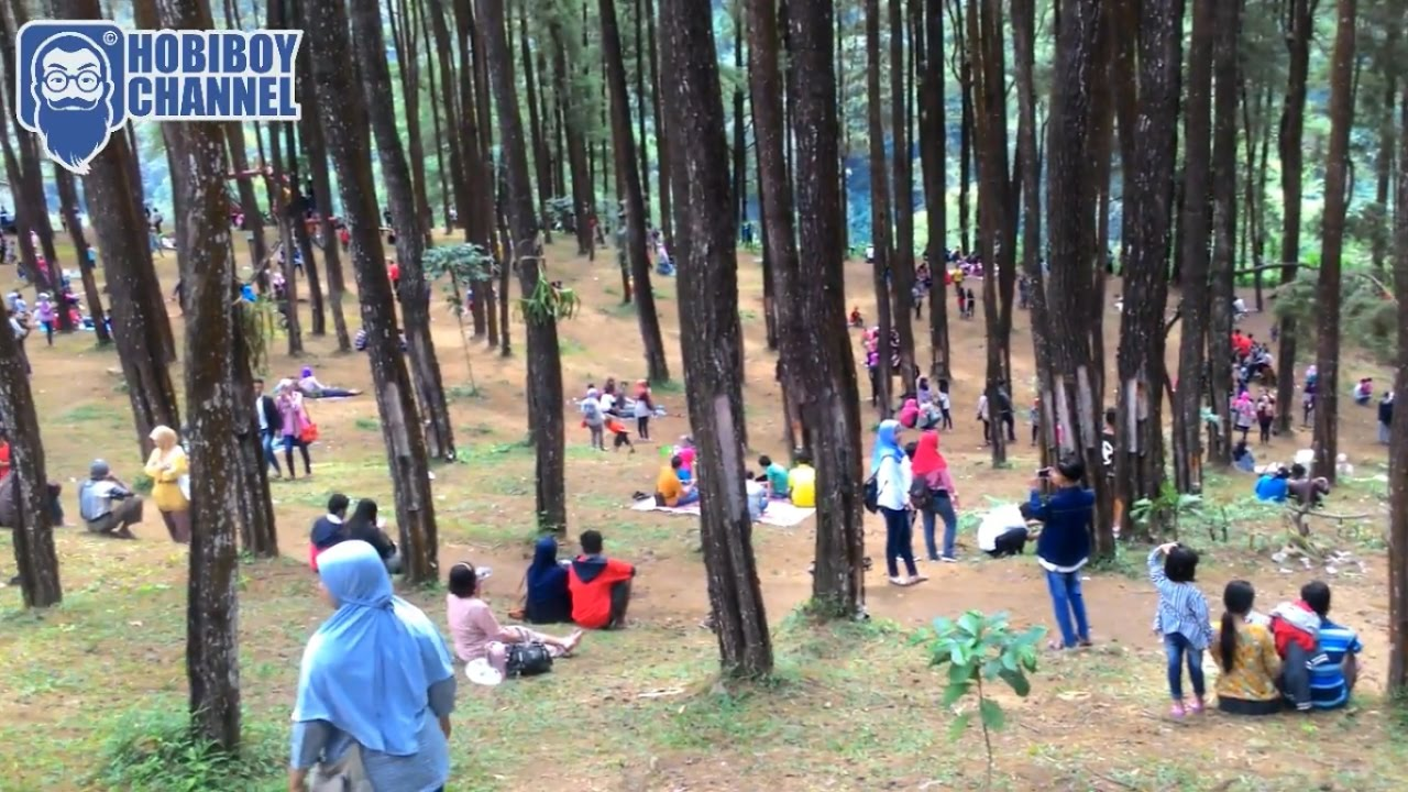 Hutan Pohon Pinus Nongko Ijo Kab Madiun Youtube Kare