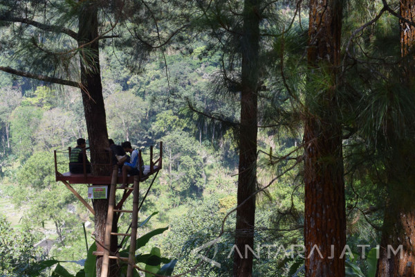 Kabupaten Madiun Kembangkan Wana Wisata Nongko Ijo Antara News Hutan