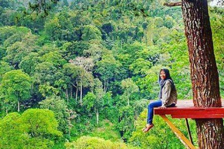 Keindahan Alam Hutan Pinus Nongko Ijo Kare Madiun Kab