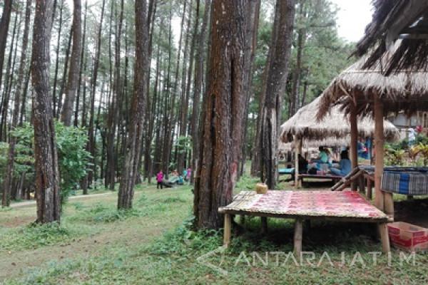 Kunjungan Hutan Wisata Nongko Ijo Madiun Meningkat Antara News Pinus