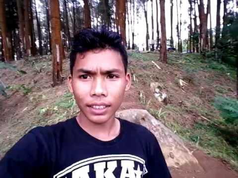 Nongko Ijo Kare Hutan Pinus Youtube Kab Madiun