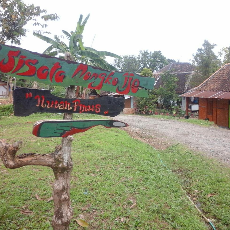 Nongkoijo Desa Kare Hutan Pinus Nongko Ijo Kab Madiun