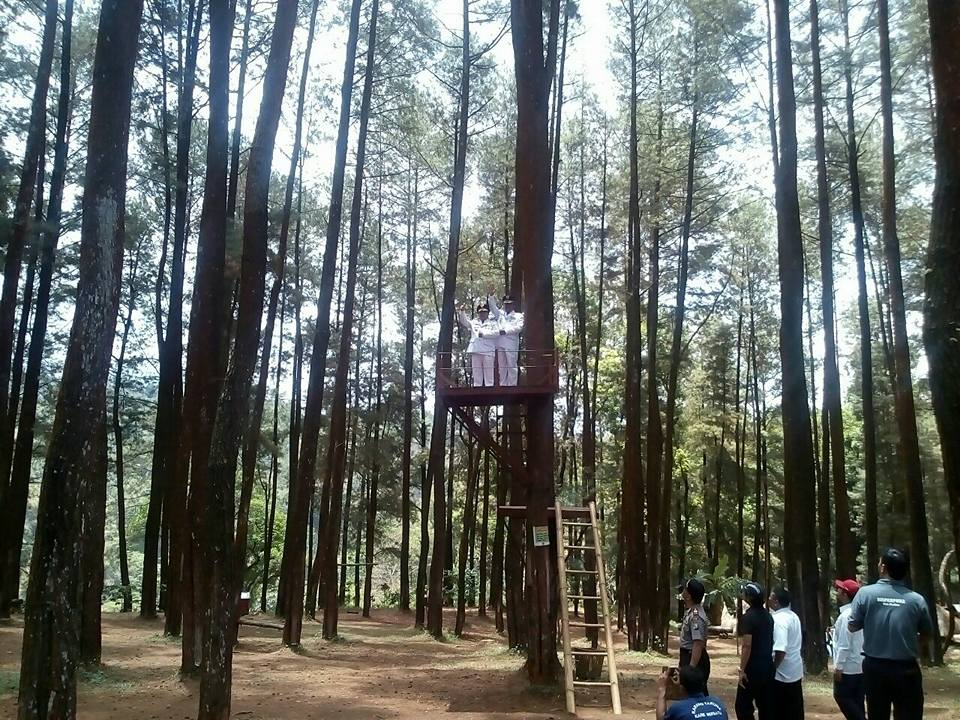 Pemotretan Destinasi Wisata Hutan Pinus Nongko Ijo Kabupaten Madiun Ronggo