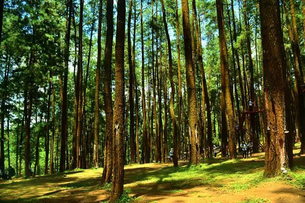Pesona Wisata Daerah Hutan Pinus Nongko Ijo Kecamatan Kare Kabupaten