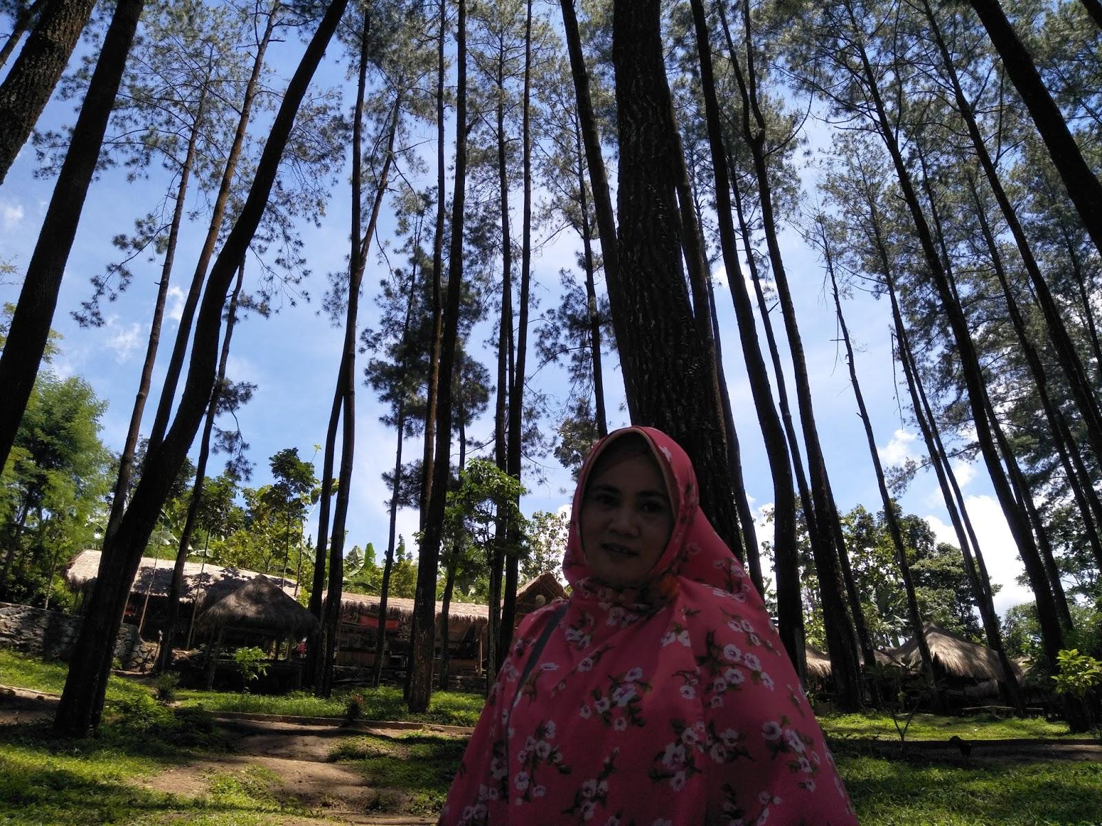 Pinus Nongko Ijo Kare Kabupaten Madiun Direkomendasikan Datang Lokasi Hutan