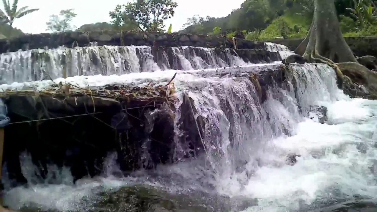 Reviewasik Hutan Pinus Nongko Ijo Kare Youtube Kab Madiun