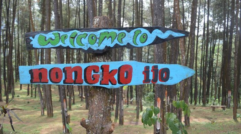 Rute Menuju Lokasi Hutan Pinus Nongko Ijo Kare Madiun Ngetripyuk