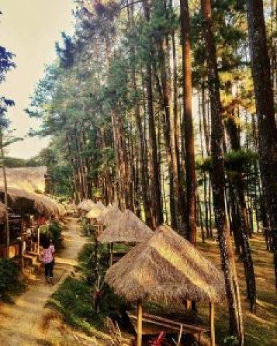 Wana Wisata Hutan Pinus Nongko Ijo Madiun Raya Hingga Masyarakat