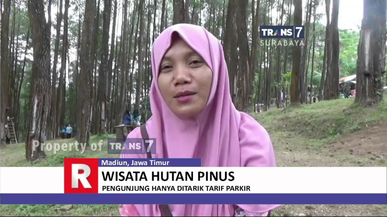 Wisata Hutan Pinus Lereng Gunung Wilis Youtube Nongko Ijo Kare