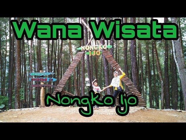Wisata Hutan Pinus Nongko Ijo Kare Kabupaten Madiun Travelerbase Wana