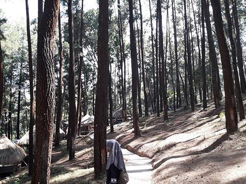 Wisata Hutan Pinus Nongko Ijo Kare Madiun Anak Zaman Wajib