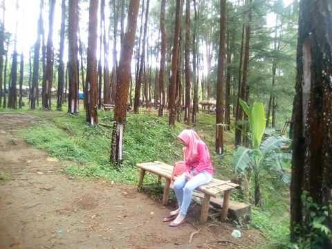 Wisata Hutan Pinus Nongko Ijo Kare Madiun Youtube Kab
