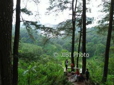 Wisata Madiun Pemandangan Hutan Pinus Nongko Ijo Bikin Fresh Pengunjung