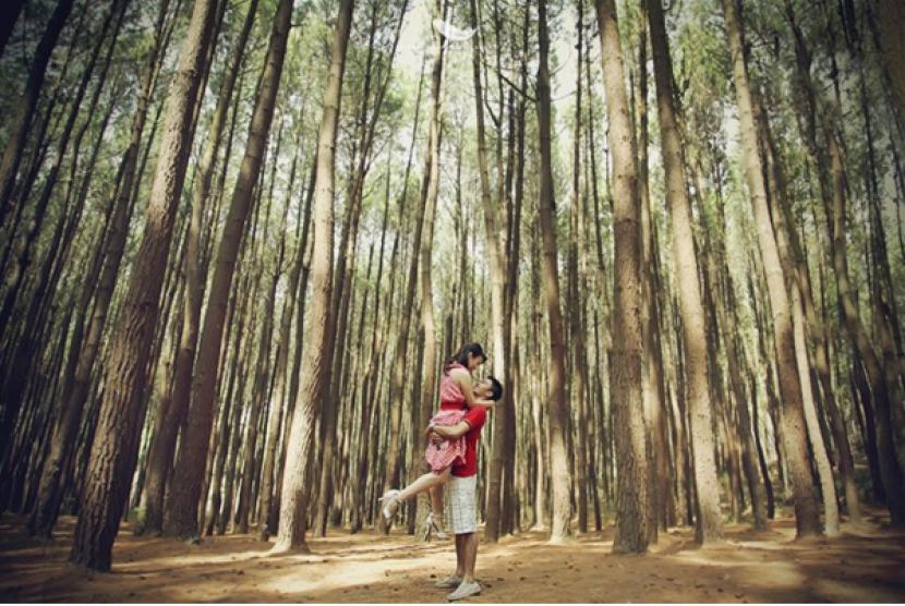 Wisatawan Hutan Pinus Nongko Ijo Meningkat Republika Online Ilustrasi Kare