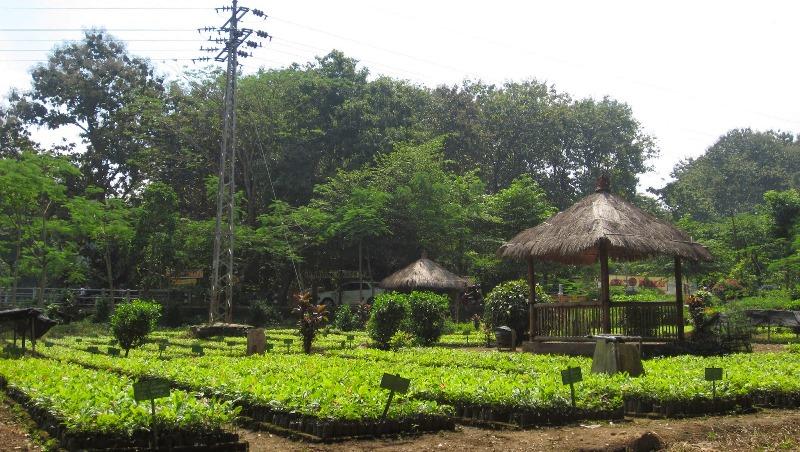 Madiun Tips Wisata Wana Grape Terletak Desa Kresek Kecamatan Wungu