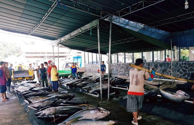 Peristiwa Pantai Sendang Biru Penghasil Ikan Tuna Terbesar Hasil Tangkapan