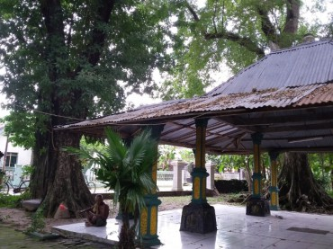 Situs Bersejarah Madiun Inilah Mitos 7 Pohon Angsana Punden Lambung