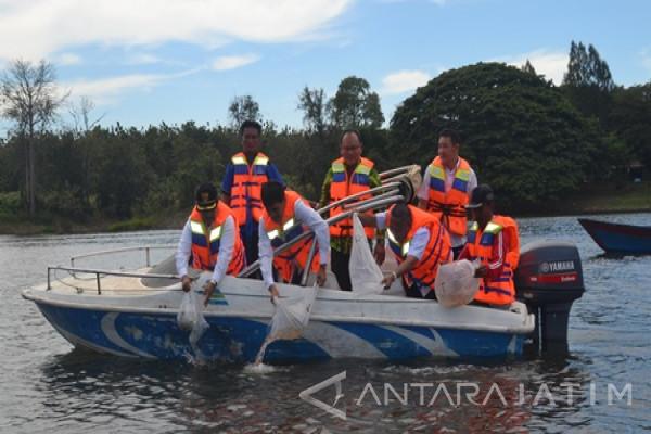Madiun Tabur 80 000 Benih Ikan Widas Antara News Jawa
