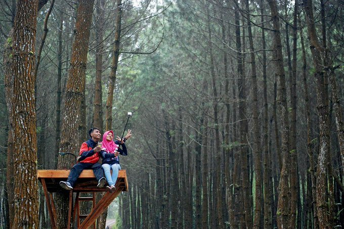Lima Lokasi Terbaik Selfie Kabupaten Magelang Hutan Pinus Kragilan Magnet