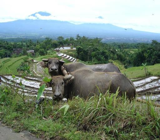 Perjalanan Santai Menuju Candi Selogriyo Ulasan Selogrio Kab Magelang